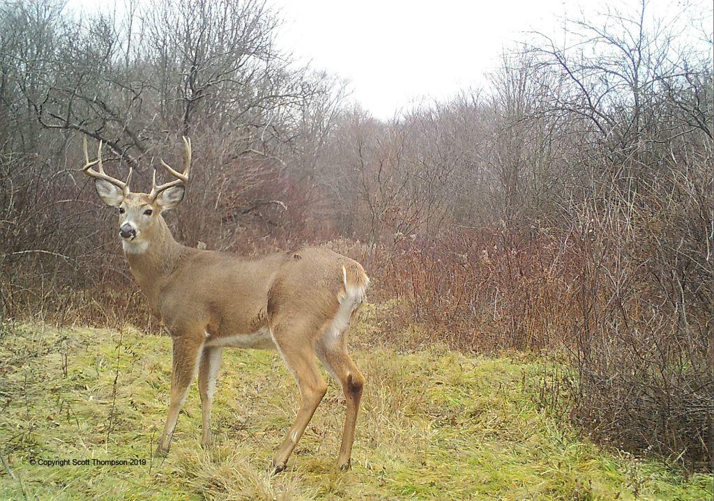 Trail-Camera_Hunting-Wood-Hood-Turks